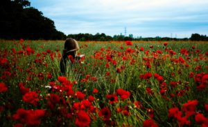 Small poppies: Highly gifted children in the early years